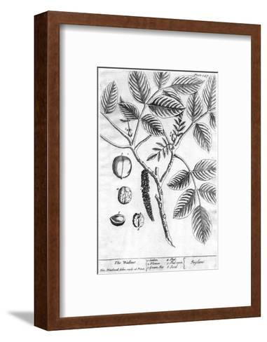 Black and White Drawing of a Branch with Leaves and Seeds--Framed Art Print