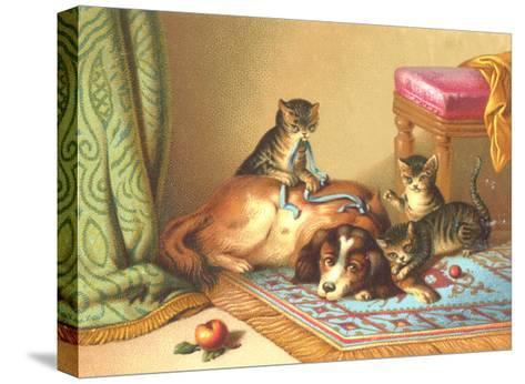 Ornery Kittens with Resting Dog--Stretched Canvas Print