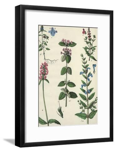 Long Stems of Flowering Plants with Small Blossoms--Framed Art Print