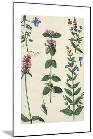 Long Stems of Flowering Plants with Small Blossoms--Mounted Art Print
