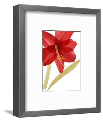 Close-Up of Large Red Hibiscus--Framed Art Print