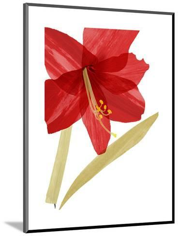 Close-Up of Large Red Hibiscus--Mounted Art Print