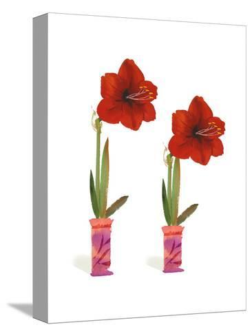 Watercolor of Two Amaryllis Plants in Vases--Stretched Canvas Print