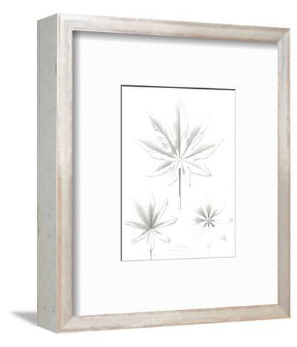 Stylized Flower and Leaf Line Drawings--Framed Art Print