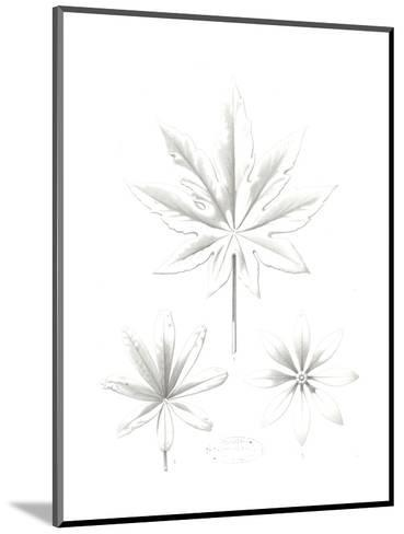 Stylized Flower and Leaf Line Drawings--Mounted Art Print