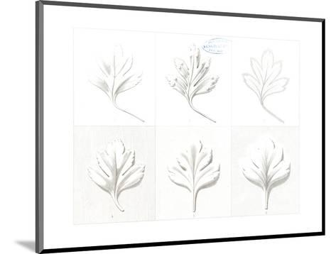 Stylized, Leafy Variations Diagram--Mounted Art Print