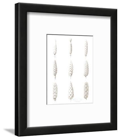 Foxglove Flower Variation Diagrams--Framed Art Print