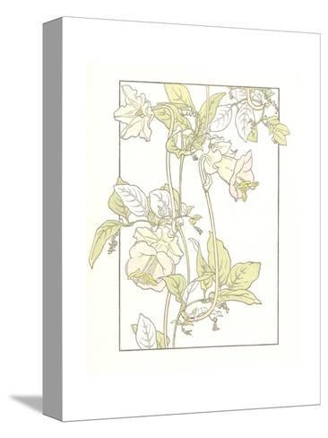 Line Drawing of Pink Flowers on Vines--Stretched Canvas Print