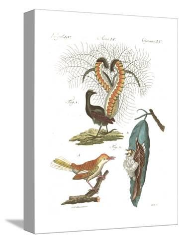 Tropical Bird and Peacock Illustrations--Stretched Canvas Print