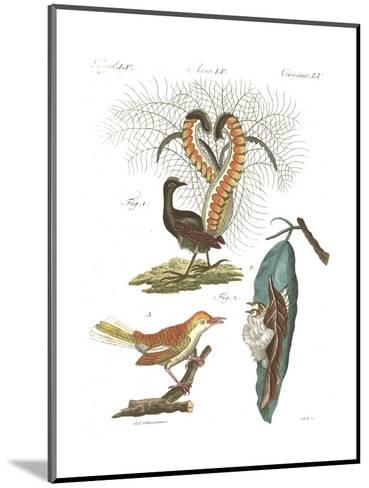 Tropical Bird and Peacock Illustrations--Mounted Art Print