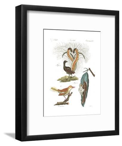 Tropical Bird and Peacock Illustrations--Framed Art Print