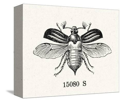 Stylized Winged Insect Illustration--Stretched Canvas Print