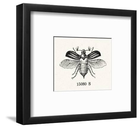 Stylized Winged Insect Illustration--Framed Art Print