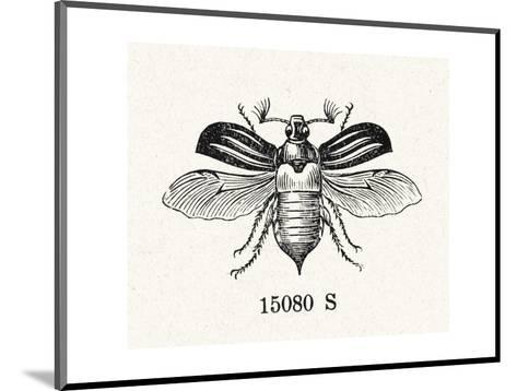 Stylized Winged Insect Illustration--Mounted Art Print