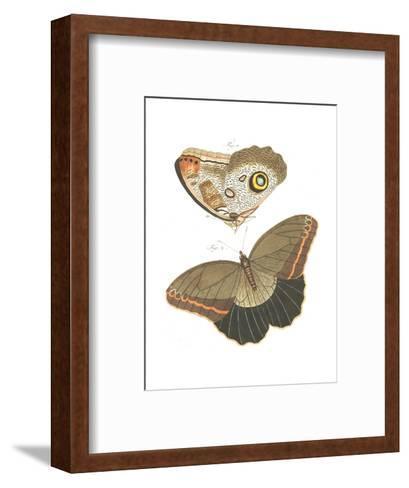 Butterfly Scientific Illustrations--Framed Art Print