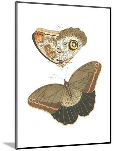Butterfly Scientific Illustrations--Mounted Art Print