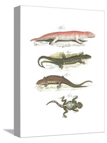 Lizard Scientific Illustrations--Stretched Canvas Print