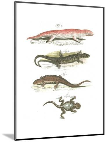 Lizard Scientific Illustrations--Mounted Art Print