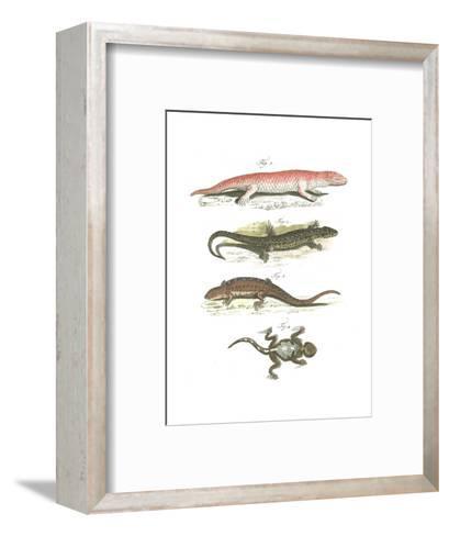 Lizard Scientific Illustrations--Framed Art Print