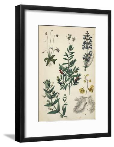 Multiple Plants with Small Flowers and Berries--Framed Art Print