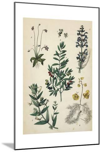 Multiple Plants with Small Flowers and Berries--Mounted Art Print