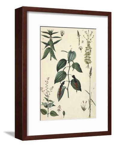 Segments of Leafy Plants with Small Seeds--Framed Art Print