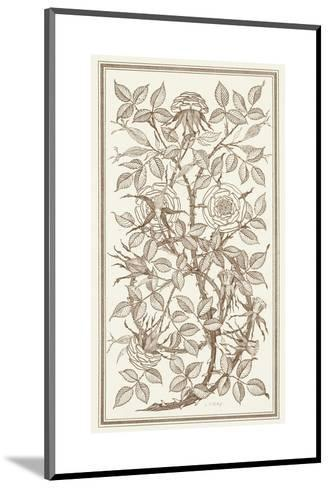 Etching of Roses on Tangled Branches--Mounted Art Print