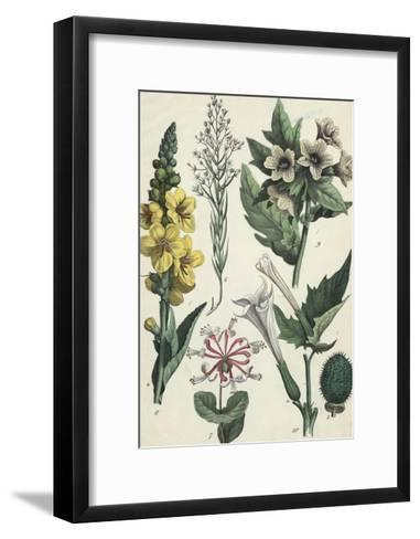 Clusters of Trumpet Shaped Flowers--Framed Art Print