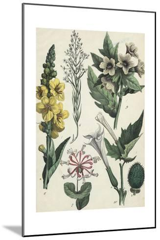 Clusters of Trumpet Shaped Flowers--Mounted Art Print