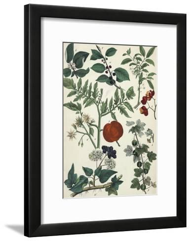 Segments of Plants with Small Flowers and Pods--Framed Art Print