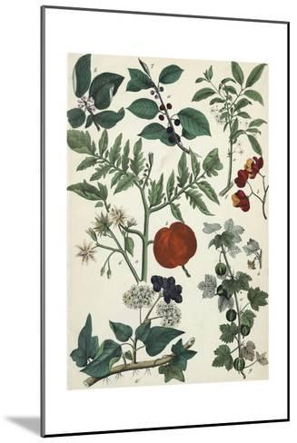 Segments of Plants with Small Flowers and Pods--Mounted Art Print