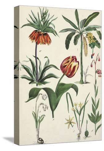 Variegated Tulip with Other Flowering Plants--Stretched Canvas Print