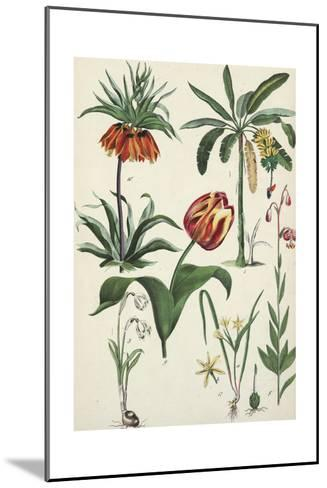 Variegated Tulip with Other Flowering Plants--Mounted Art Print