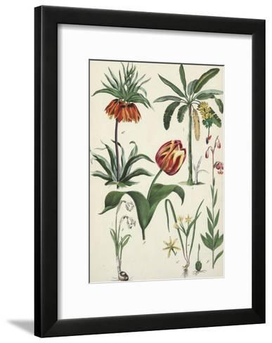 Variegated Tulip with Other Flowering Plants--Framed Art Print