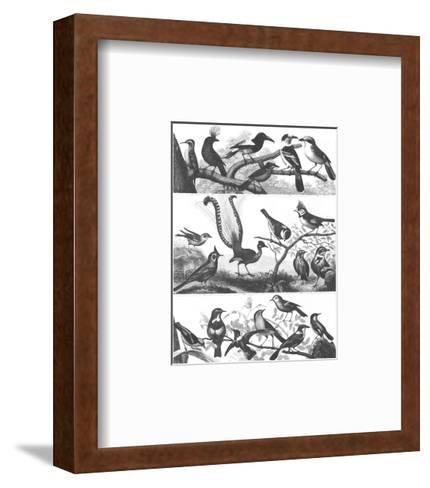 Black and White Bird Illustrations--Framed Art Print