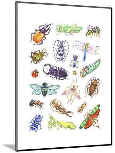 Array of Insects, Including Beetles, Grasshoppers, and Caterpillars--Mounted Art Print