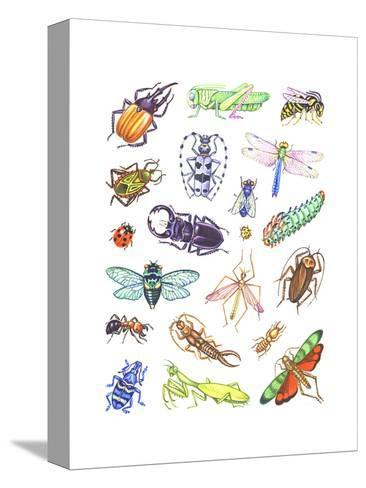Array of Insects, Including Beetles, Grasshoppers, and Caterpillars--Stretched Canvas Print