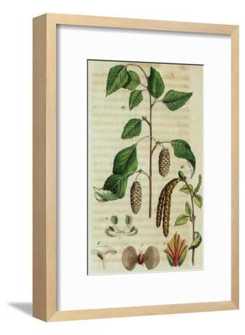 Branch with Leaves and Pinecones--Framed Art Print