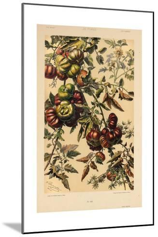 Branches of Fruit--Mounted Art Print