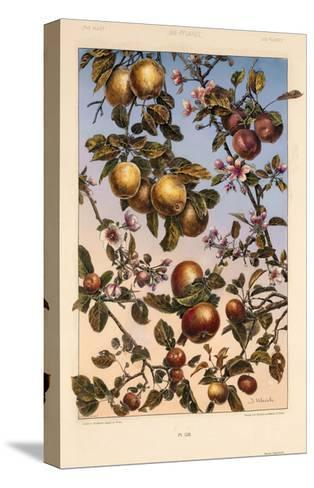Multiple Branches of Fruit and Blossoms--Stretched Canvas Print