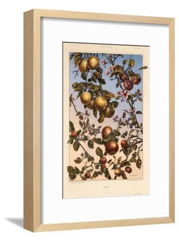Multiple Branches of Fruit and Blossoms--Framed Art Print