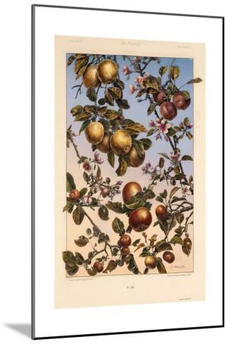 Multiple Branches of Fruit and Blossoms--Mounted Art Print