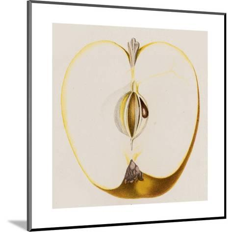 Close-Up of Half of Apple--Mounted Art Print