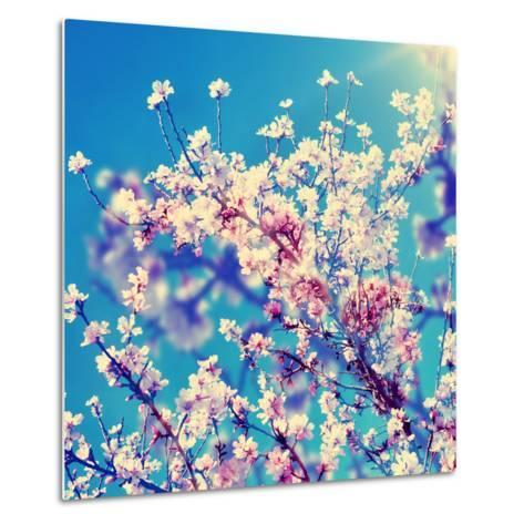 Double Exposure of Almond Trees in Full Bloom-nito-Metal Print