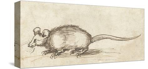 Mouse, C. 1480-1520-Albrecht Durer-Stretched Canvas Print