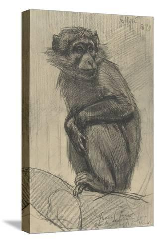 Monkey on a Branch, 1879-August Allebe-Stretched Canvas Print