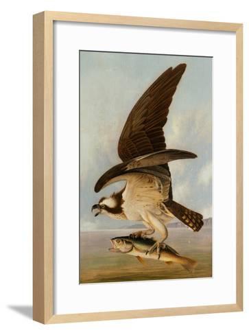 Osprey and Weakfish, 1829-John James Audubon-Framed Art Print