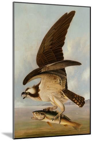 Osprey and Weakfish, 1829-John James Audubon-Mounted Giclee Print