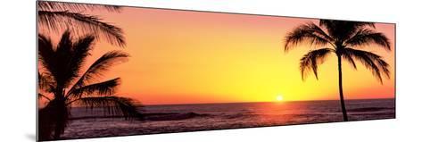 Palm Trees at the Coast at Sunset, Waikoloa, Hawaii County, Hawaii, USA--Mounted Photographic Print
