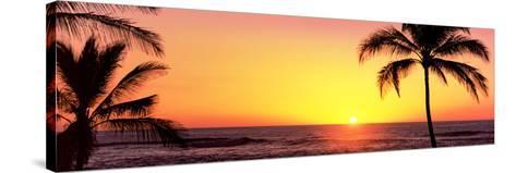 Palm Trees at the Coast at Sunset, Waikoloa, Hawaii County, Hawaii, USA--Stretched Canvas Print